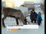 Ксюхин олень Прошка на ТВ